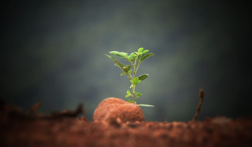 Grow In Grace