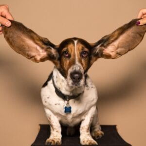 Have Ears to Hear